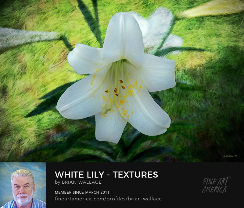 White Lily - Textures by Brian Wallace