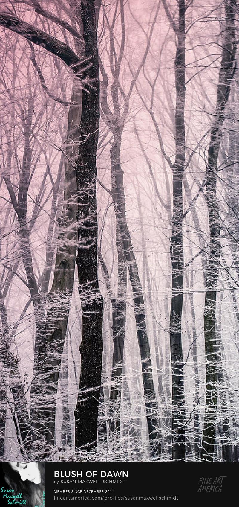 Blush of Dawn Art Print by Susan Maxwell Schmidt