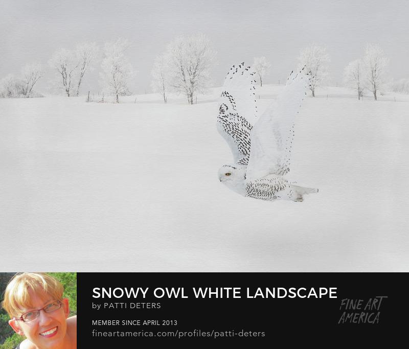 snowy owl white bird flight texture ©patti-deters.pixels.com
