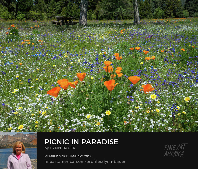 Picnic in Paradise California Poppies and Wildflowers by Lynn Bauer