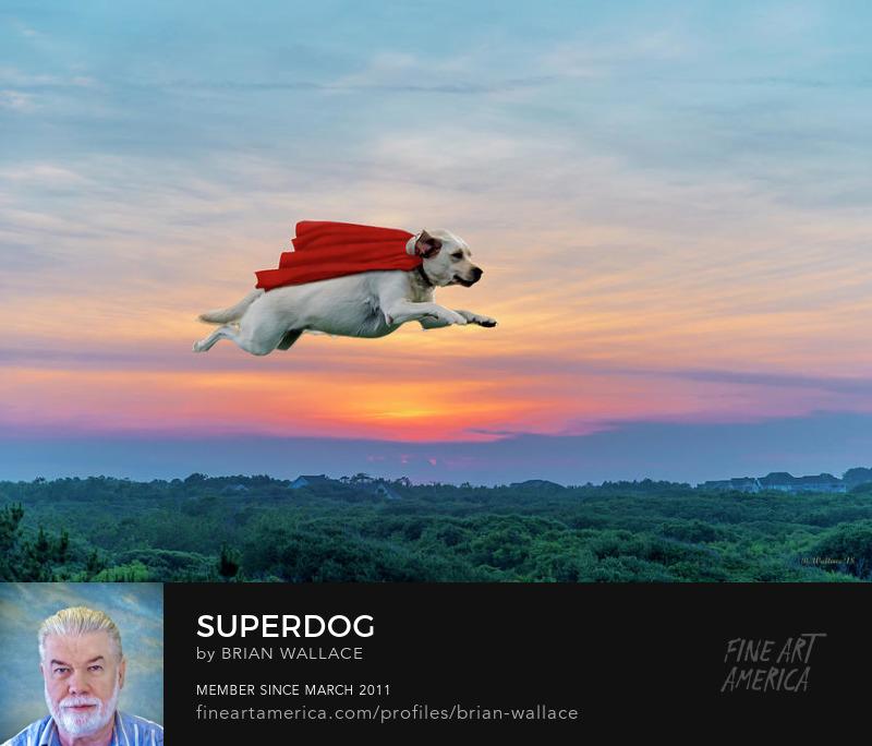 Superdog by Brian Wallace
