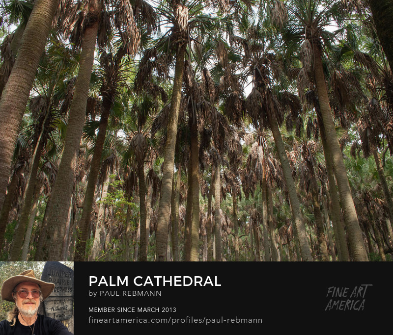 View online purchase options for Palm Cathedral by Paul Rebmann