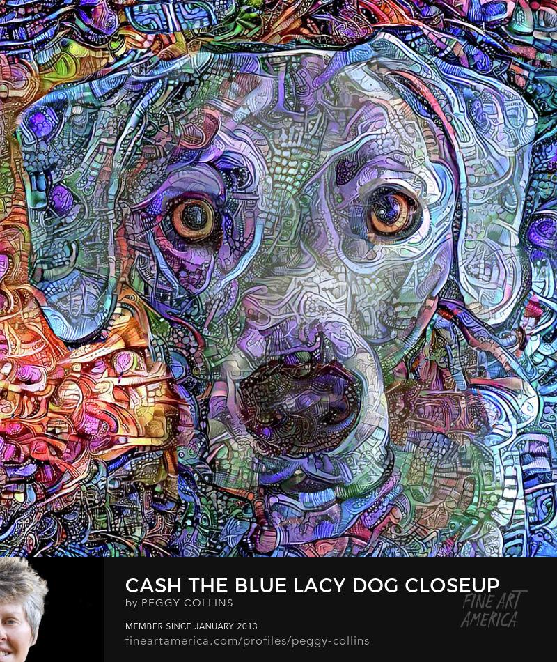 blue lacy dog closeup