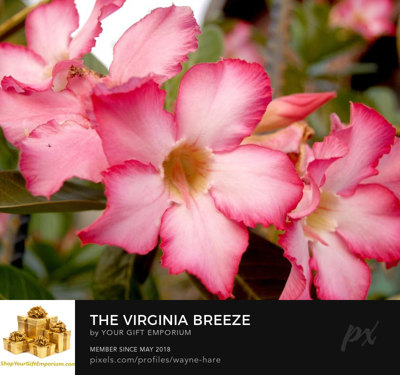 The Virginia Breeze Unique gift ideas for any Virginian!