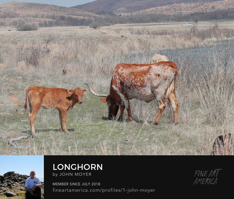 Longhorn Cow and Calf at Wichita Mountains National Wildlife Refuge, Mar. 16, 2017