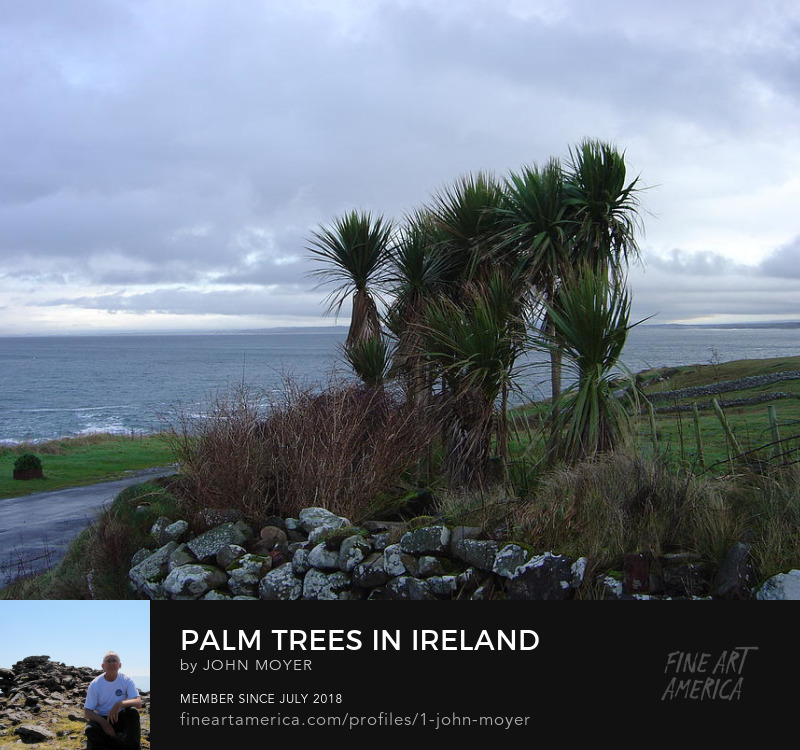 Palm Trees Growing in Ireland