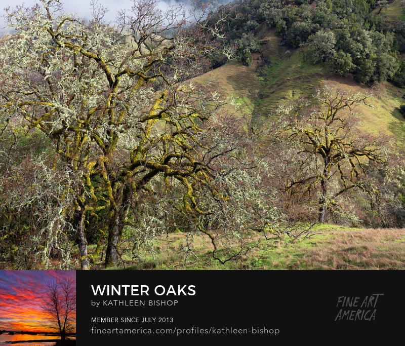 Winter Oaks by Kathleen Bishop Photography