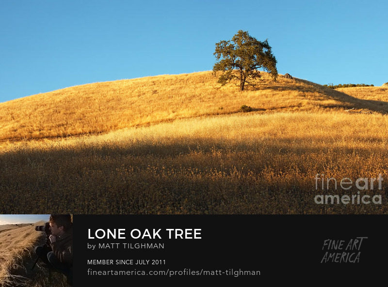 Oak Tree Chaparral Photography Prints