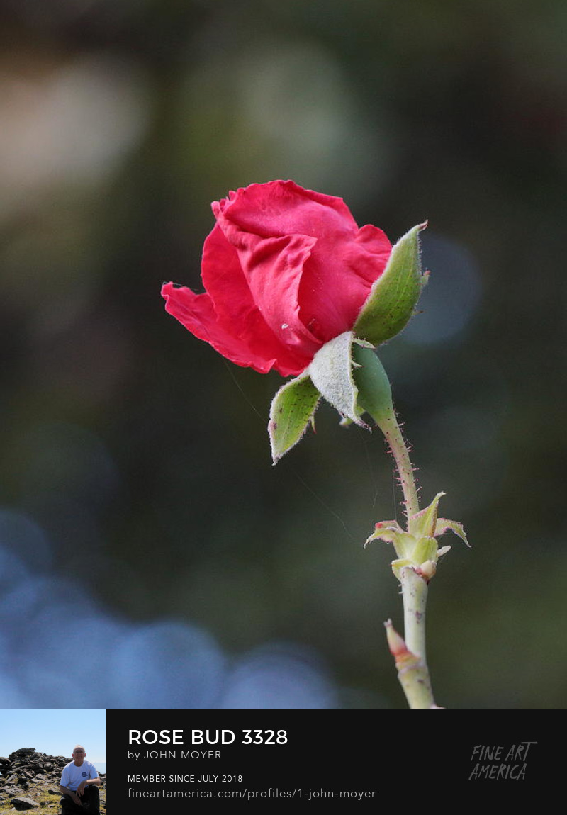 Rose, October 15, 2018