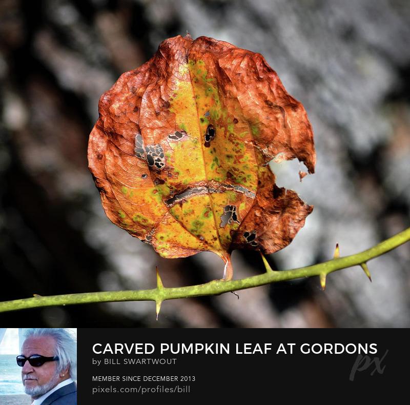Halloween Pumpkin Photography Prints