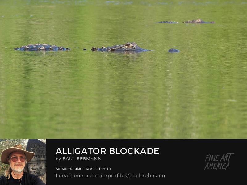 View online purchase options for Alligator Blockade by Paul Rebmann