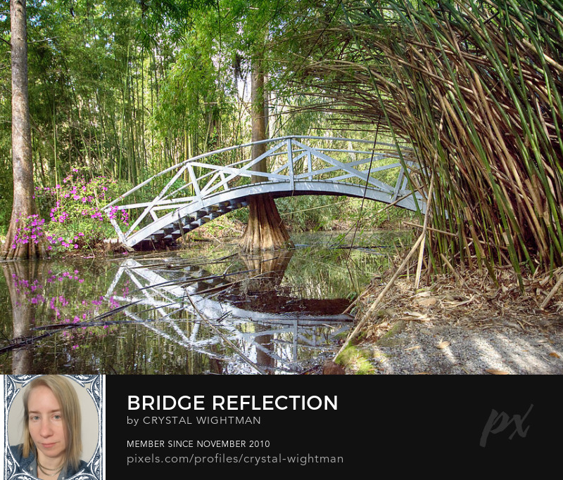 A reflection of a bridge with bamboo at Magnolia Gardens.