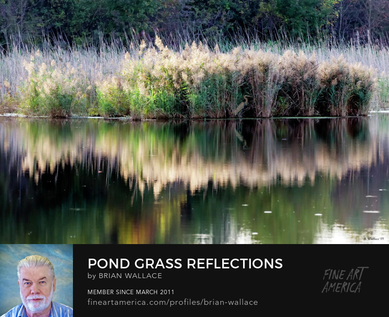 Pond Grass Reflections by Brian Wallace