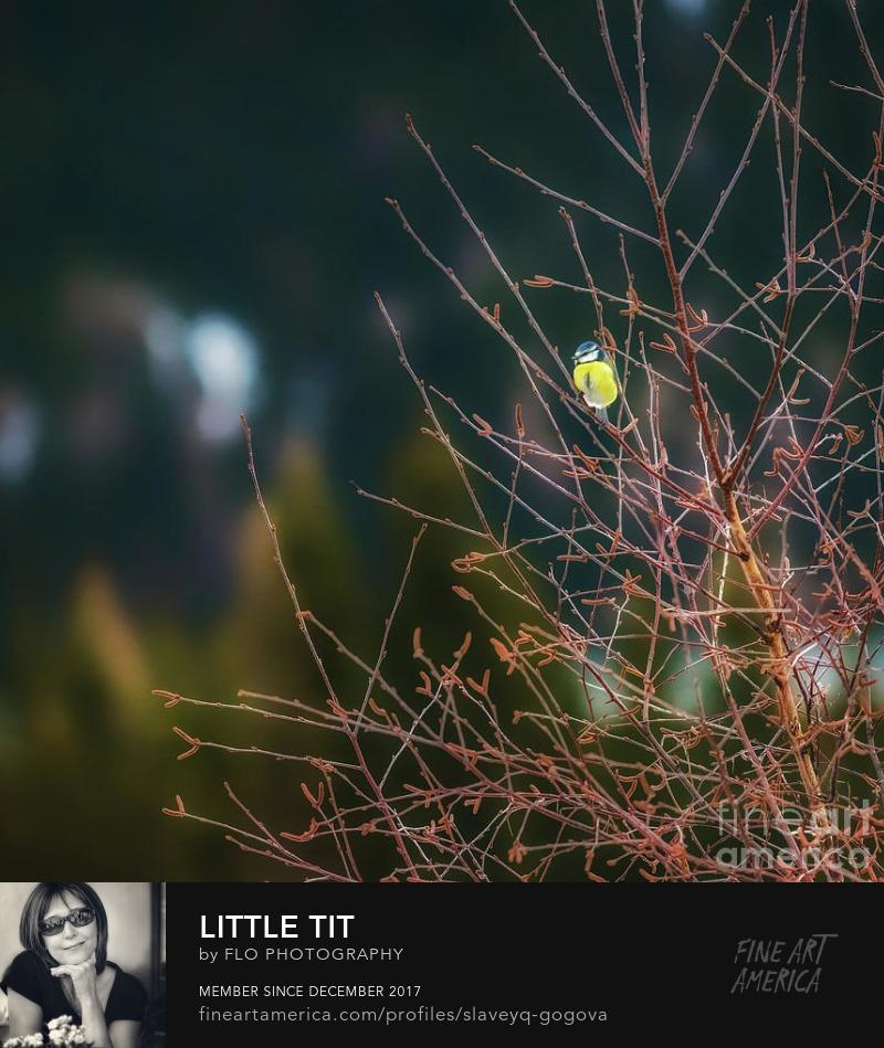 bird tit tree Flo Photography Art Prints