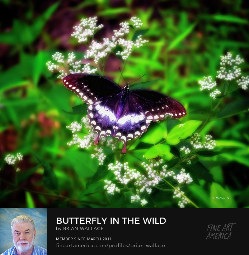 Butterfly In The Wild by Brian Wallace