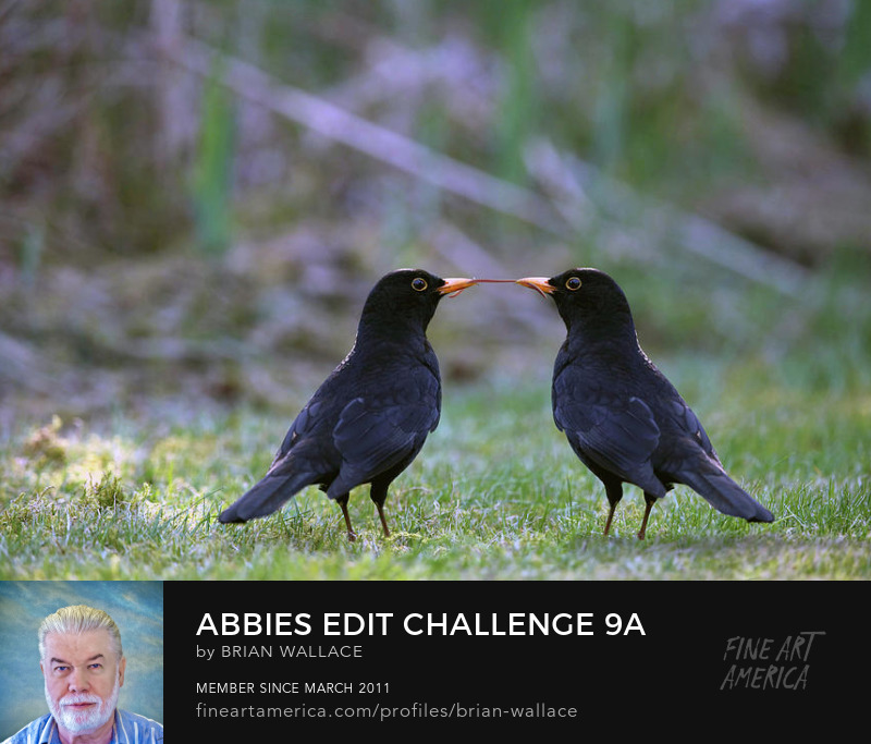Abbies Edit Challenge 9a by Brian Wallace