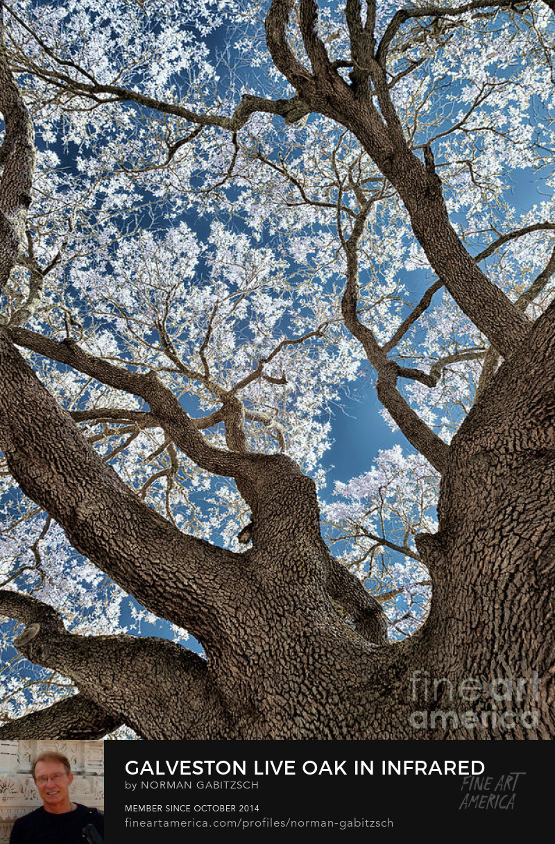 Sell fine Art photography Online
