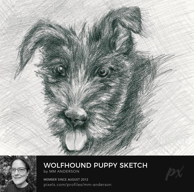Wolfhound Dog Art Prints