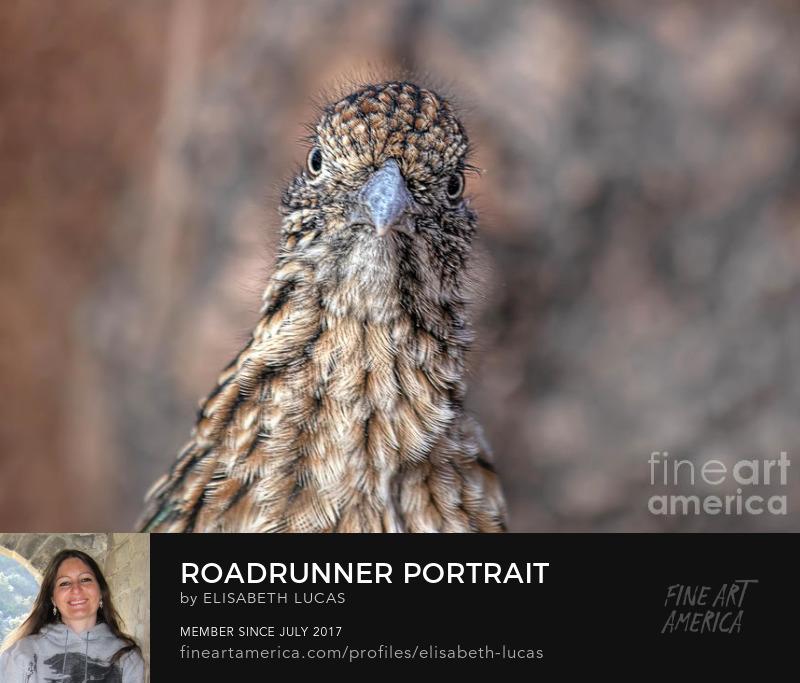 Photography Prints