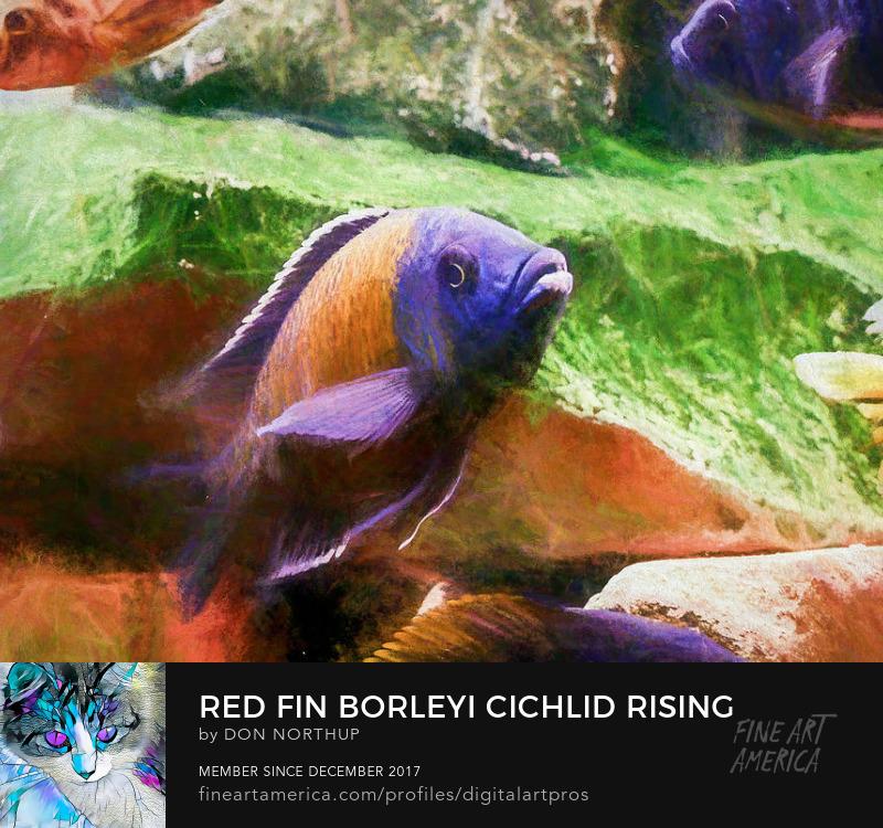 Red Fin Borleyi