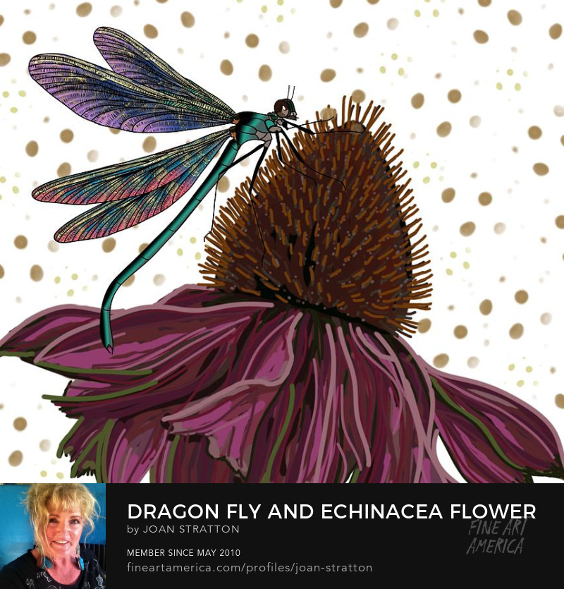 Cone Flower Insect Bug Drawing Dragonfly Echinacea by Joan Stratton