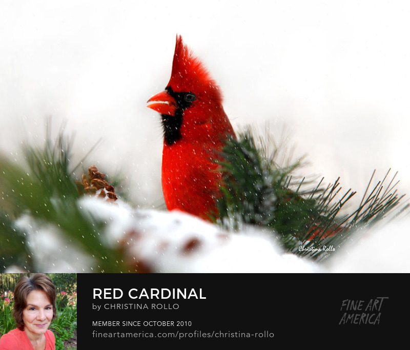 Red Cardinal Art Prints for Sale