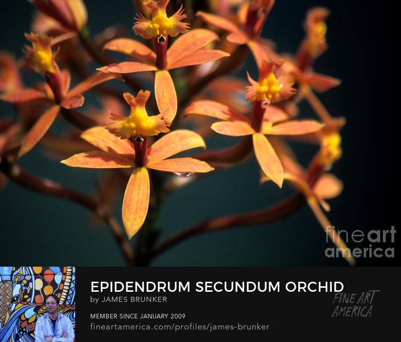 Orchid Canvas Art