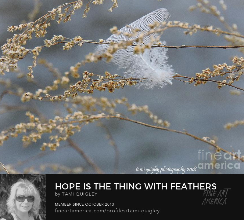 Hope Is The Thing With Feathers by Tami Quigley Photography