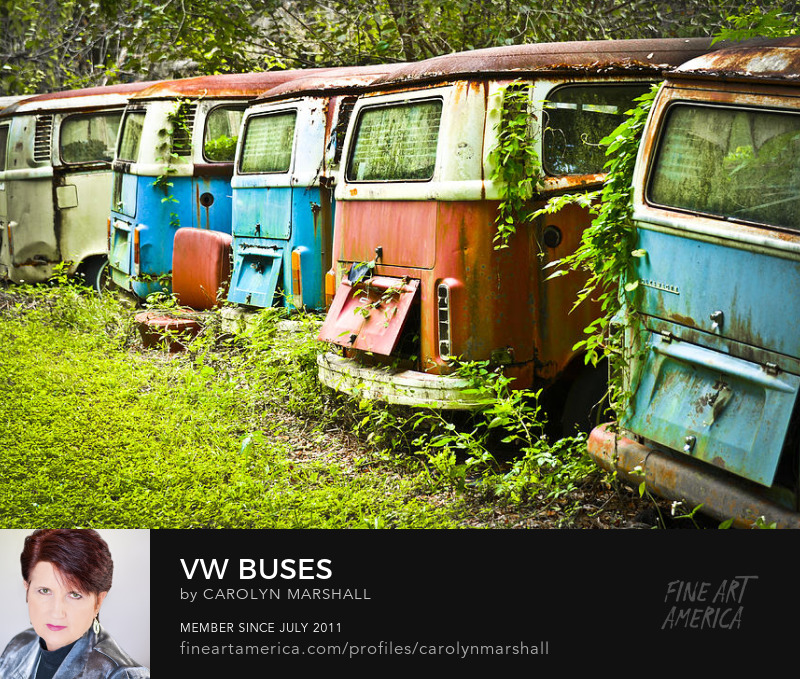 Volkswagen Bus Prints for sale by Carolyn Marshall