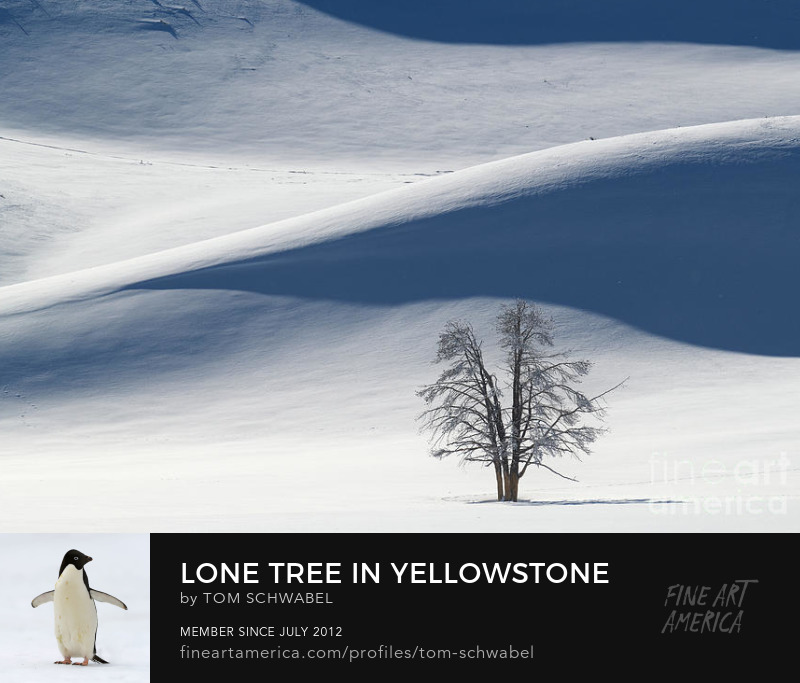 Lone Tree on Snowy Hill in Hayden Valley of Yellowstone National Park