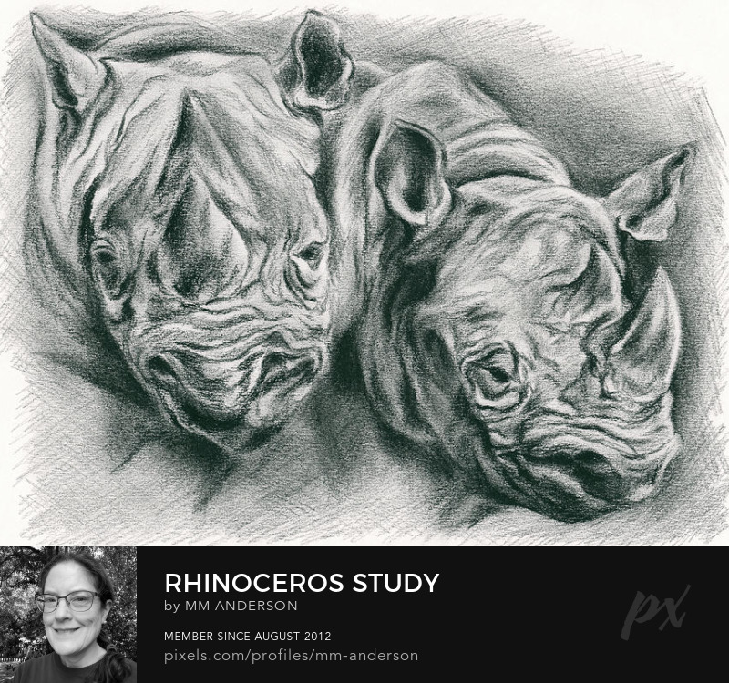 Rhinoceros Art Prints