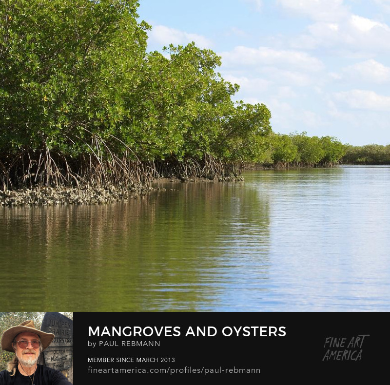 View online purchase options for Mangroves and Oysters by Paul Rebmann