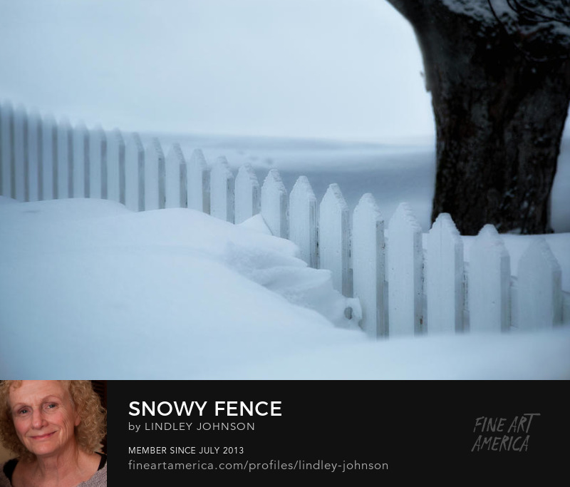 snowy fence by lindley johnson