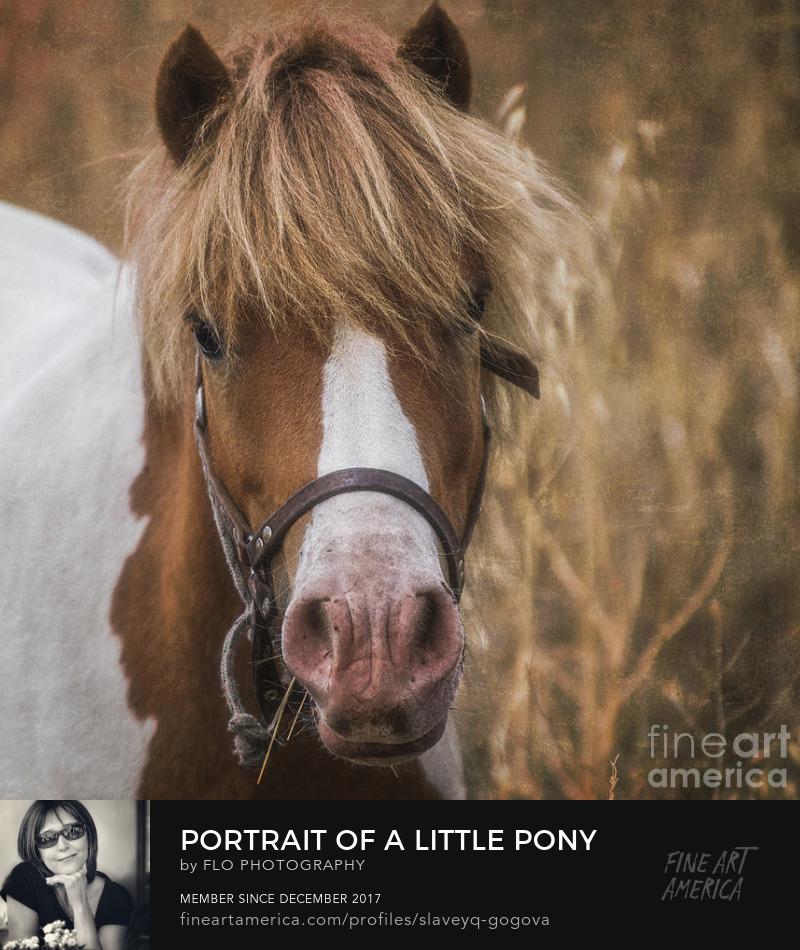 animal horse portrait Flo Photography