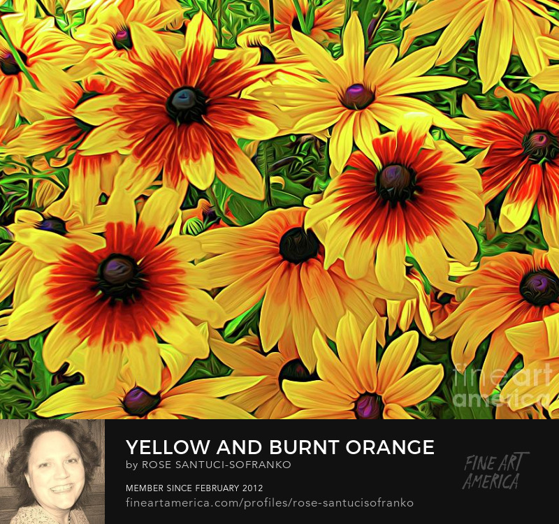 Yellow and Burnt Orange Rudbeckia Coneflowers with Abstract Expressionistic Effect