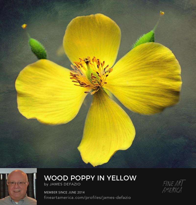Wood Poppy In Yellow