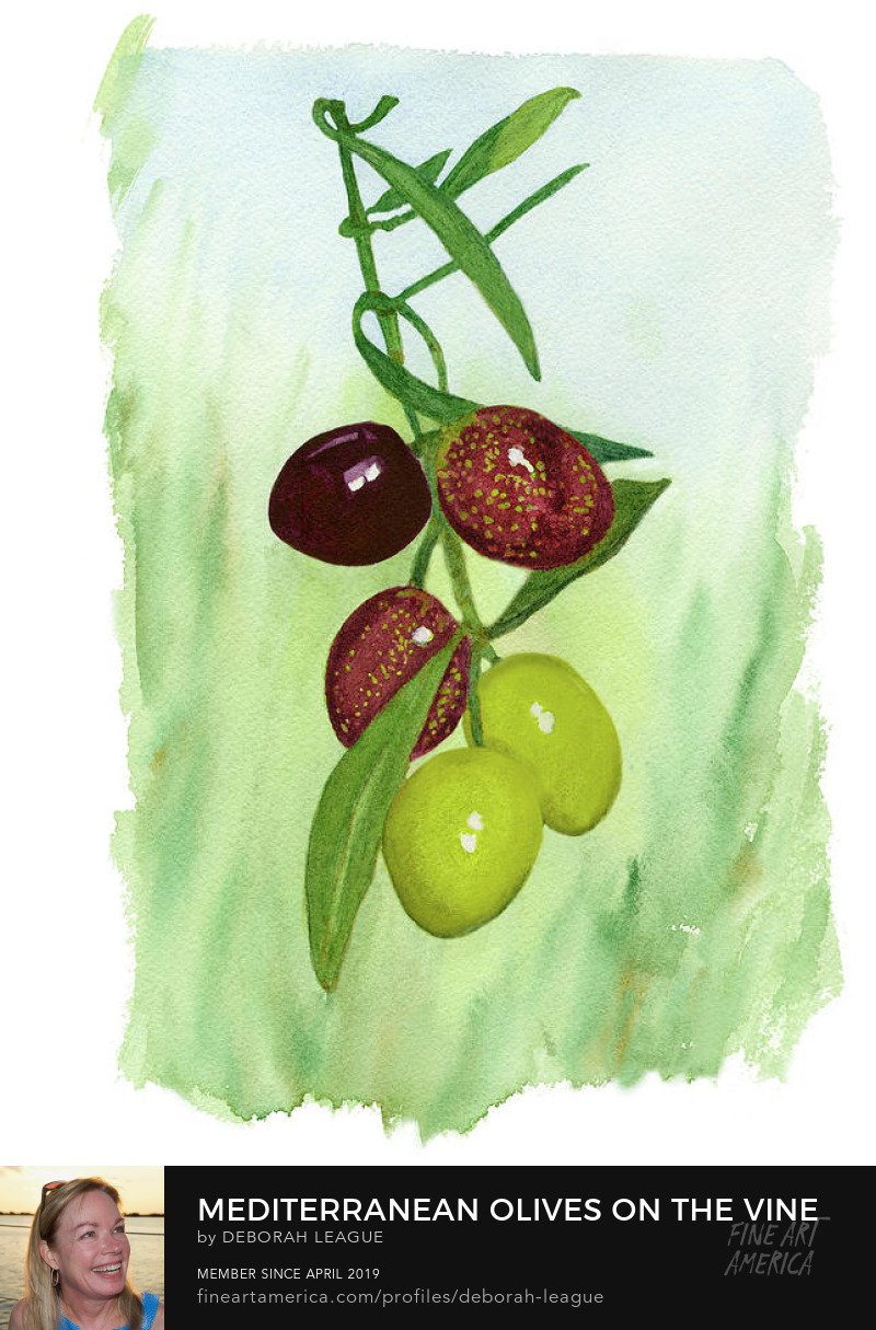 Ripening olives on vine watercolor Deborah League