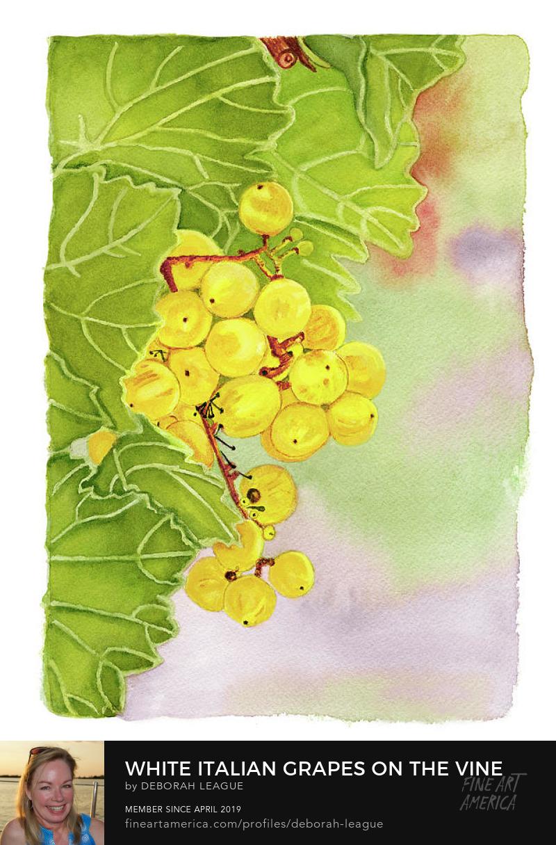 Grape cluster watercolor deborah league