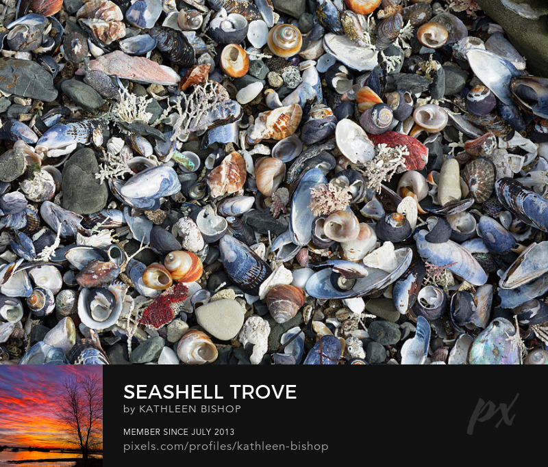 Seashell Trove by Kathleen Bishop Photography
