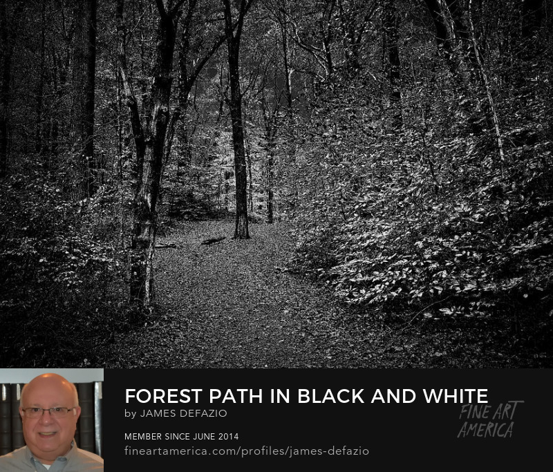 Forest Path In Black And White