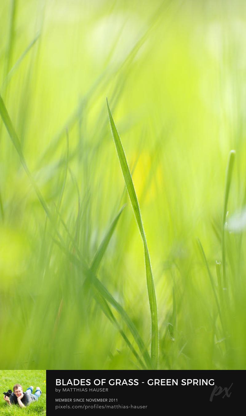 Green Grass Photography Prints