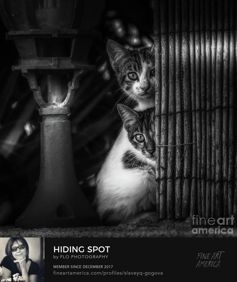 animals cats BW Flo Photography Art Prints
