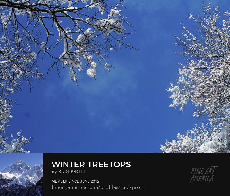 winter treetops by Rudi Prott