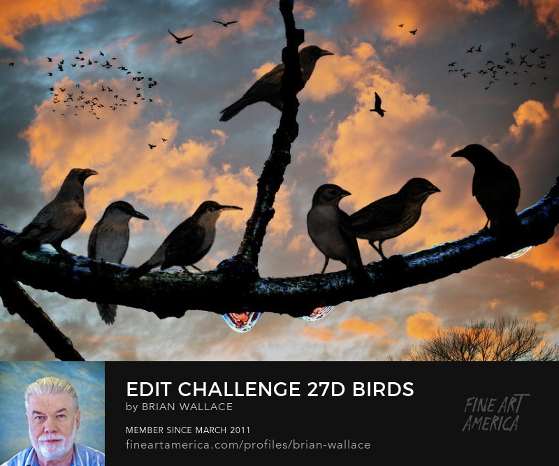 Edit Challenge 27 d Birds by Brian Wallace
