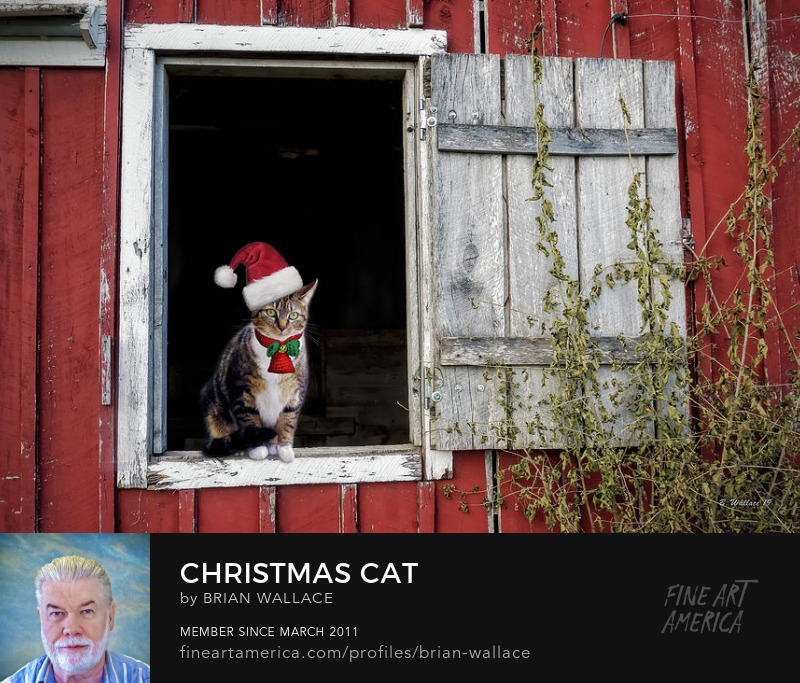 Christmas Cat by Brian Wallace