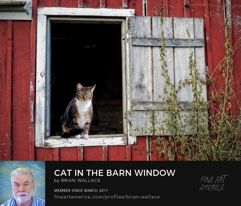 Cat In The Barn Window by Brian Wallace