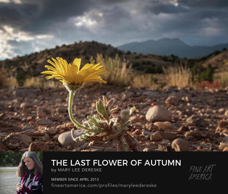 the-last-flower-of-autumn-mary-lee-dereske