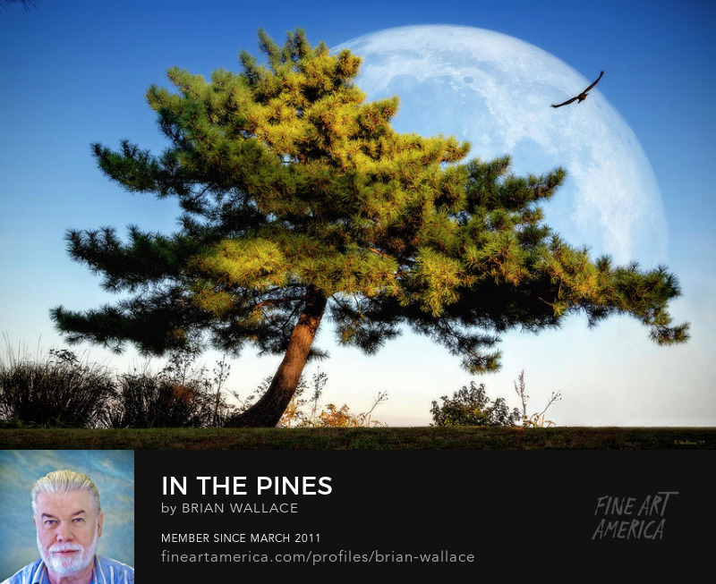 In The Pines by Brian Wallace