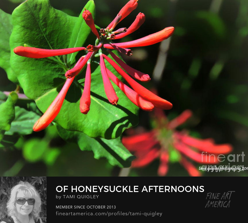 Of Honeysuckle Afternoons by Tami Quigley Photography