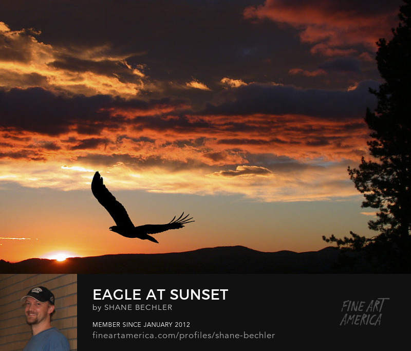 Eagle At Sunset by Shane Bechler